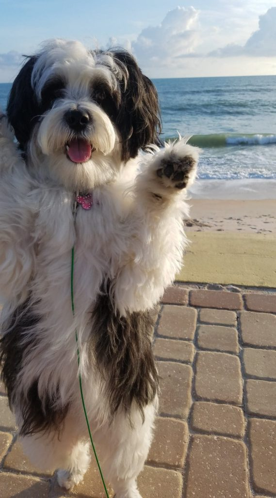 puppy waves goodbye until we see you at Flagler Beach on Florida's coast