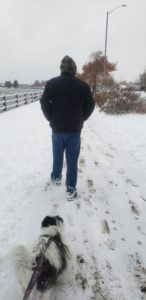 Puppy walking in the snow