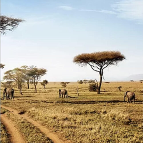 African Safari Animals and landscape
