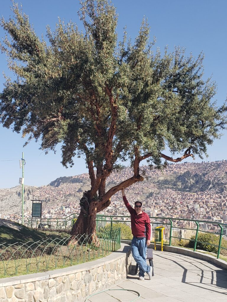 tree with La Paz city in the background