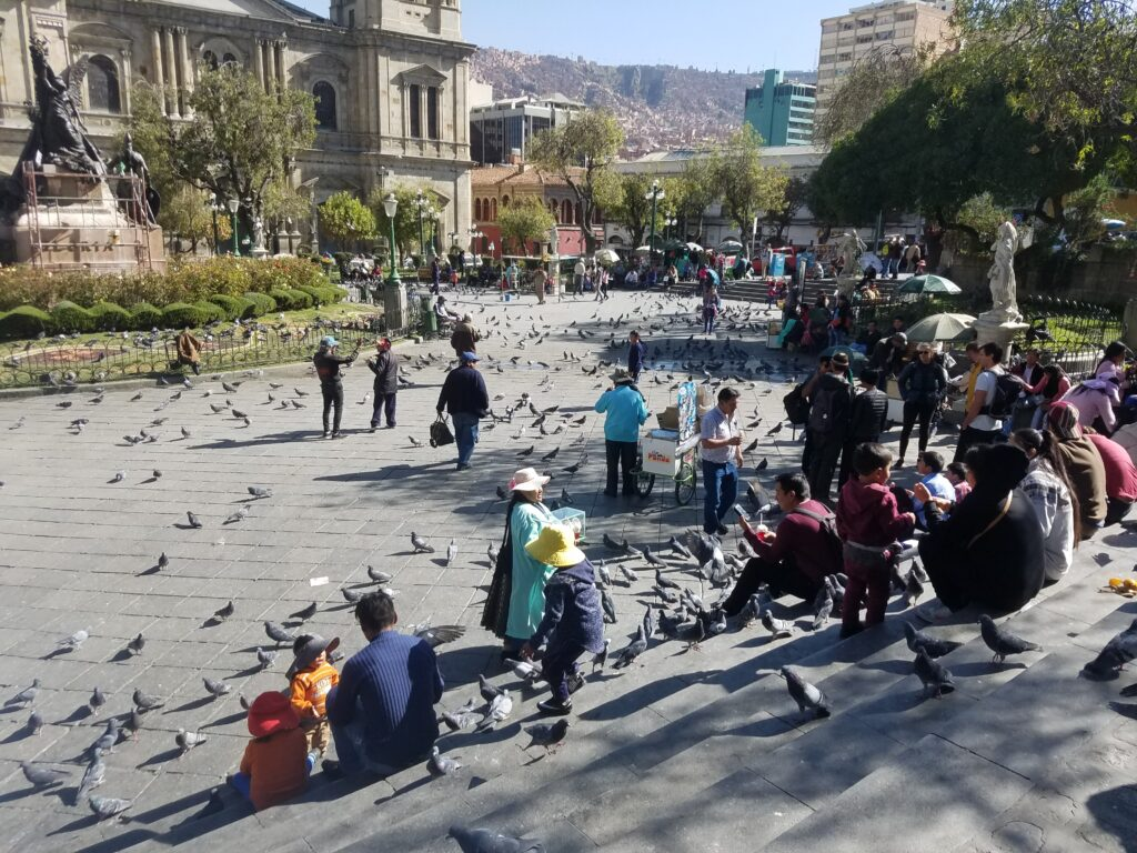 city plaza filled with pigeons