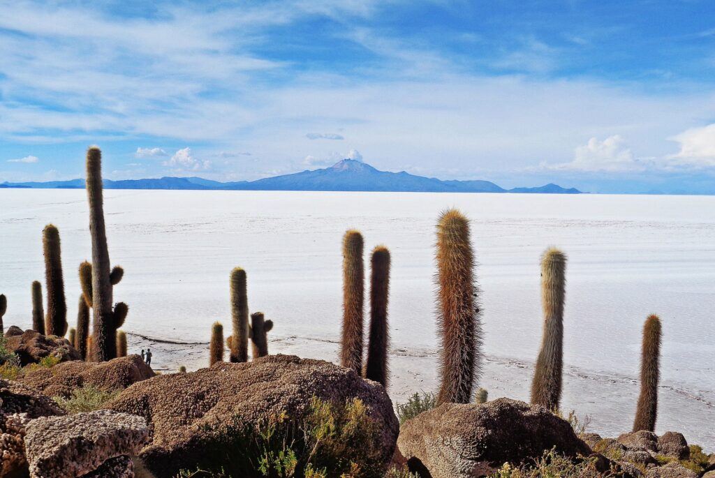 salt flats in bolivia with cactus