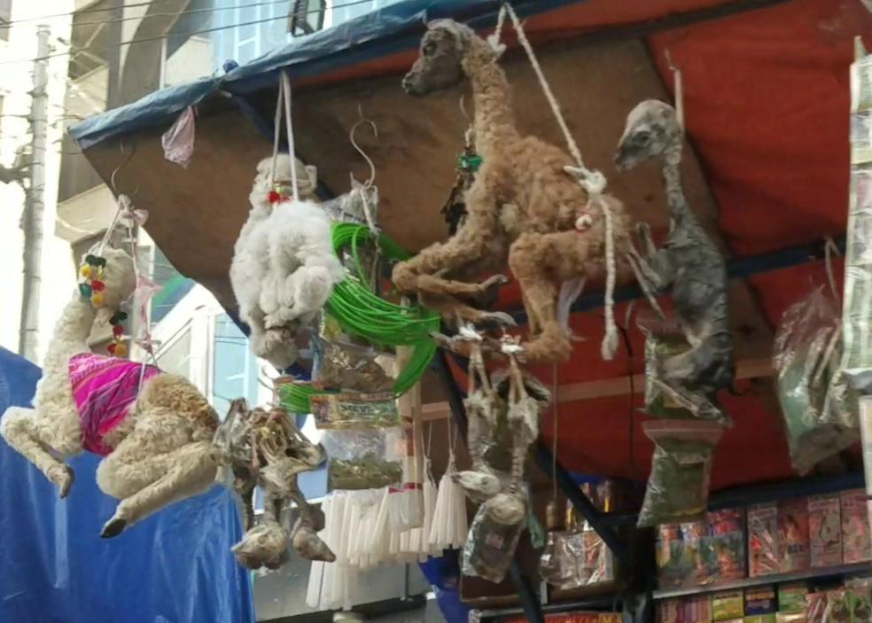 llamas hanging up for sale