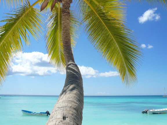 palm tree on a beach overlooking the sea