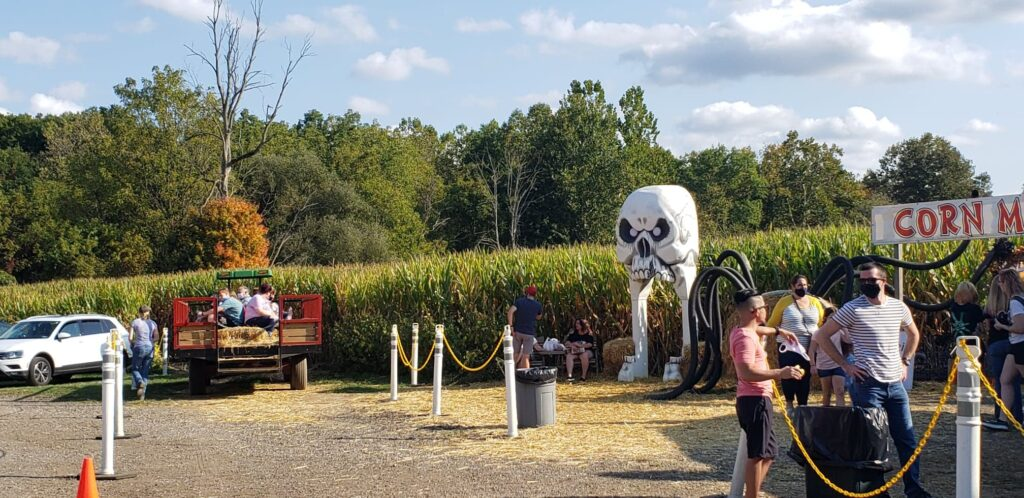hay ride and corn maze Activities in the fall at Szalays Market in Cuyahoga Valley