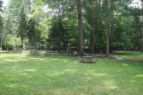 grassy yard and trees near airbnb Cleveland 6