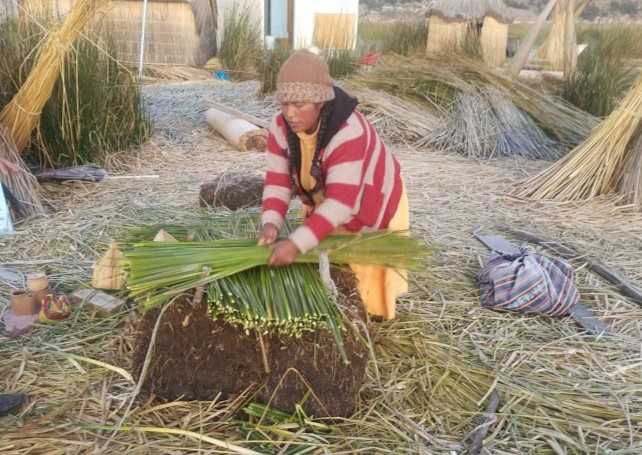 uros woman laying reeds on each other