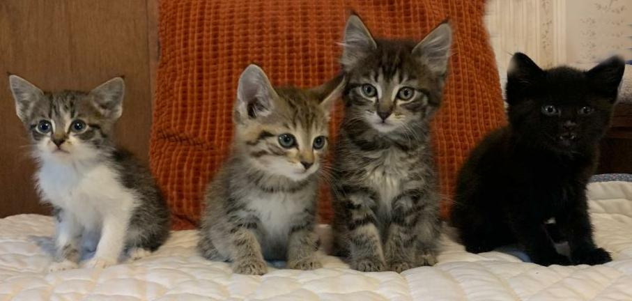 four kittens in front of an orange pillow