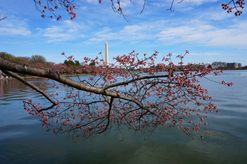 cherry blossoms and a national monument in Washington DC for a relaxing empty nest vacation