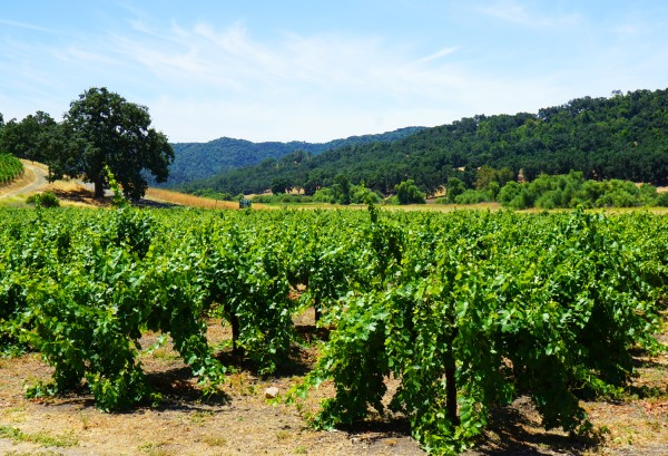 wine vineyards on a US empty nest vacation in Paso Robles