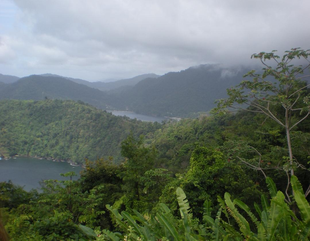 view of green landscape for tobago guest houses