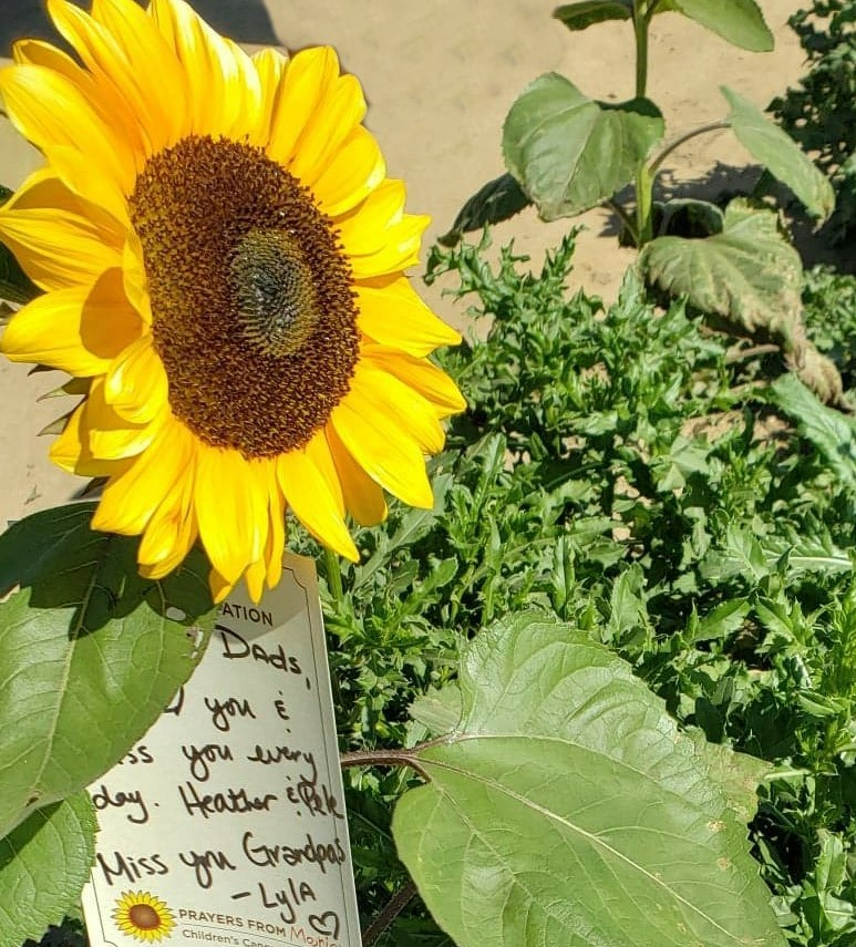 Flower with a letter on it dedicated to a loved one attached to a sunflower