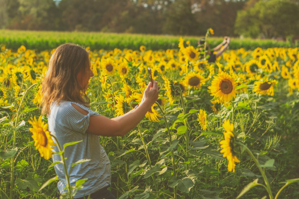 girl taking a picture in a sunflower field