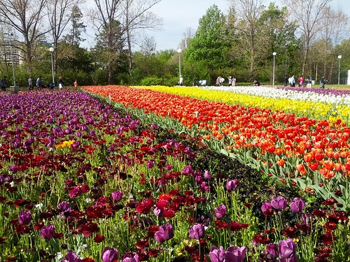 flowers in rows at a flower festival in Australia