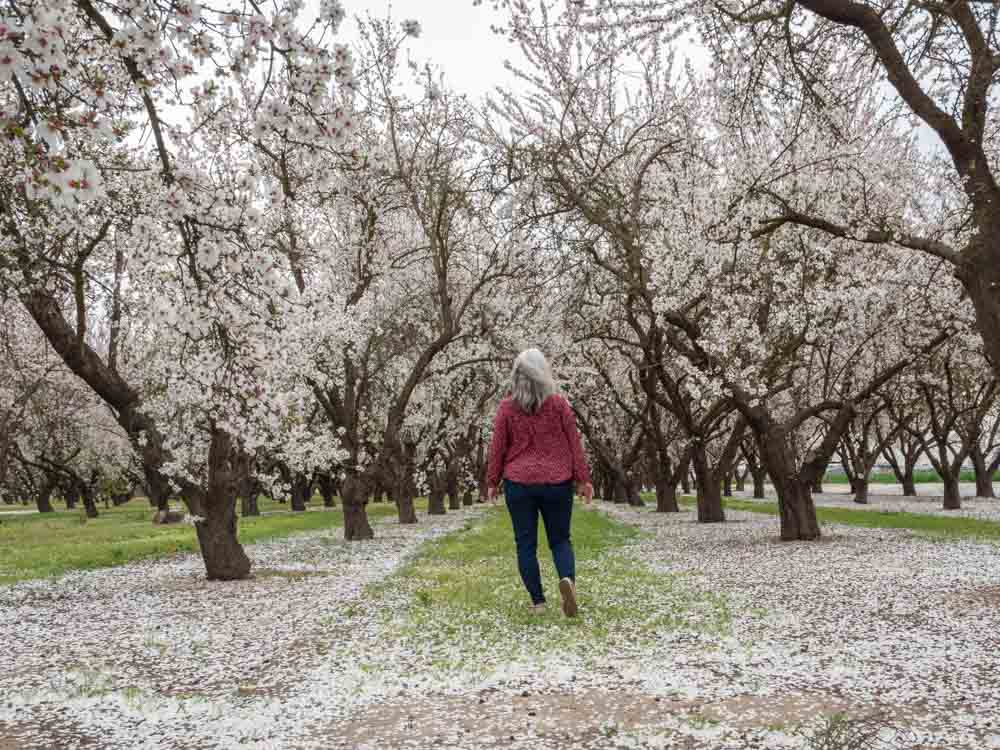 lady walking among almond blossoms in a beautiful flower field in the USA