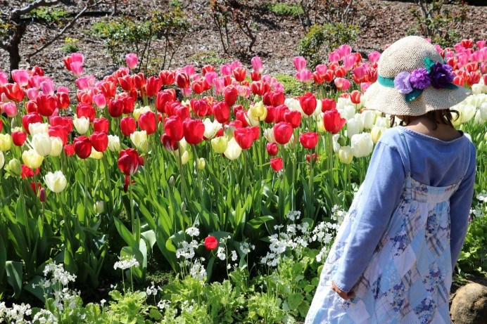 small girl admiring beautiful tulips at the best flower festival in the world