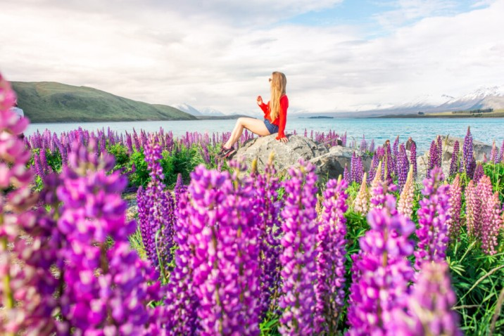 lady sitting in middle of beautiful lupin flower field