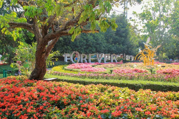 flower displays at the best flower festival in the world at Chiang Rai