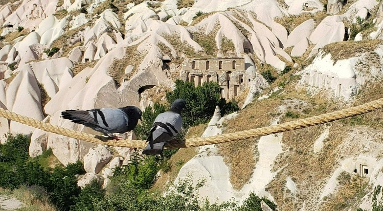 pigeons perched in front of Pigeon Valley in Cappadocia
